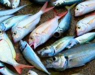 Lire la suite de Le poisson : la qualité nutrionnelle, le goût en plus