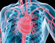 Lire la suite de Mieux connaître les maladies cardio-vasculaires
