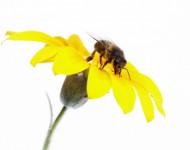 Lire la suite de Tour d'horizon des remèdes de la ruche