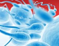 Lire la suite de Don de spermatozoïdes et d'ovocytes : les conditions de l'ouverture précisées