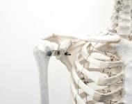 Lire la suite de L'essentiel sur l'ostéoporose