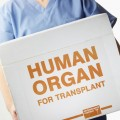 Female surgeon carrying transplant organ box