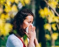Lire la suite de Pollens d'ambroisie : des moutons contre les allergies ?