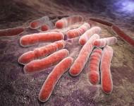 Lire la suite de La tuberculose toujours présente en Europe