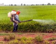 Lire la suite de Produits phytosanitaires ou comment mieux combattre les effets indésirables