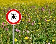Lire la suite de Alerte aux tiques : les bons réflexes pour protéger sa famille