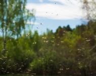 Lire la suite de Des millions de moustiques contre la dengue et le zika à Rio