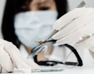Lire la suite de La transmission de Zika par un simple baiser est improbable – Etude