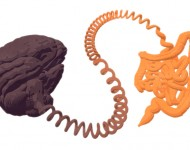 Lire la suite de Maladie de Crohn : un déséquilibre du microbiome ? Etude