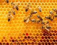 Lire la suite de Produits de la ruche : nos alliés santé !